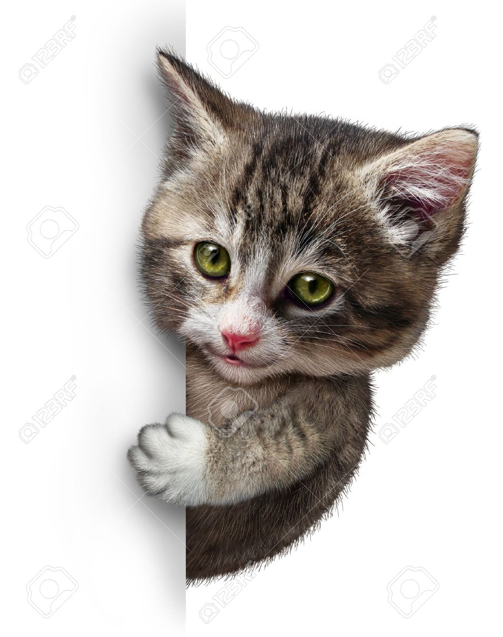Cat or kitten with a blank vertical card sign as a cute feline with a smiling happy expression supporting and communicating a message pertaining to pet health care and welfare Stock Photo - 19703986
