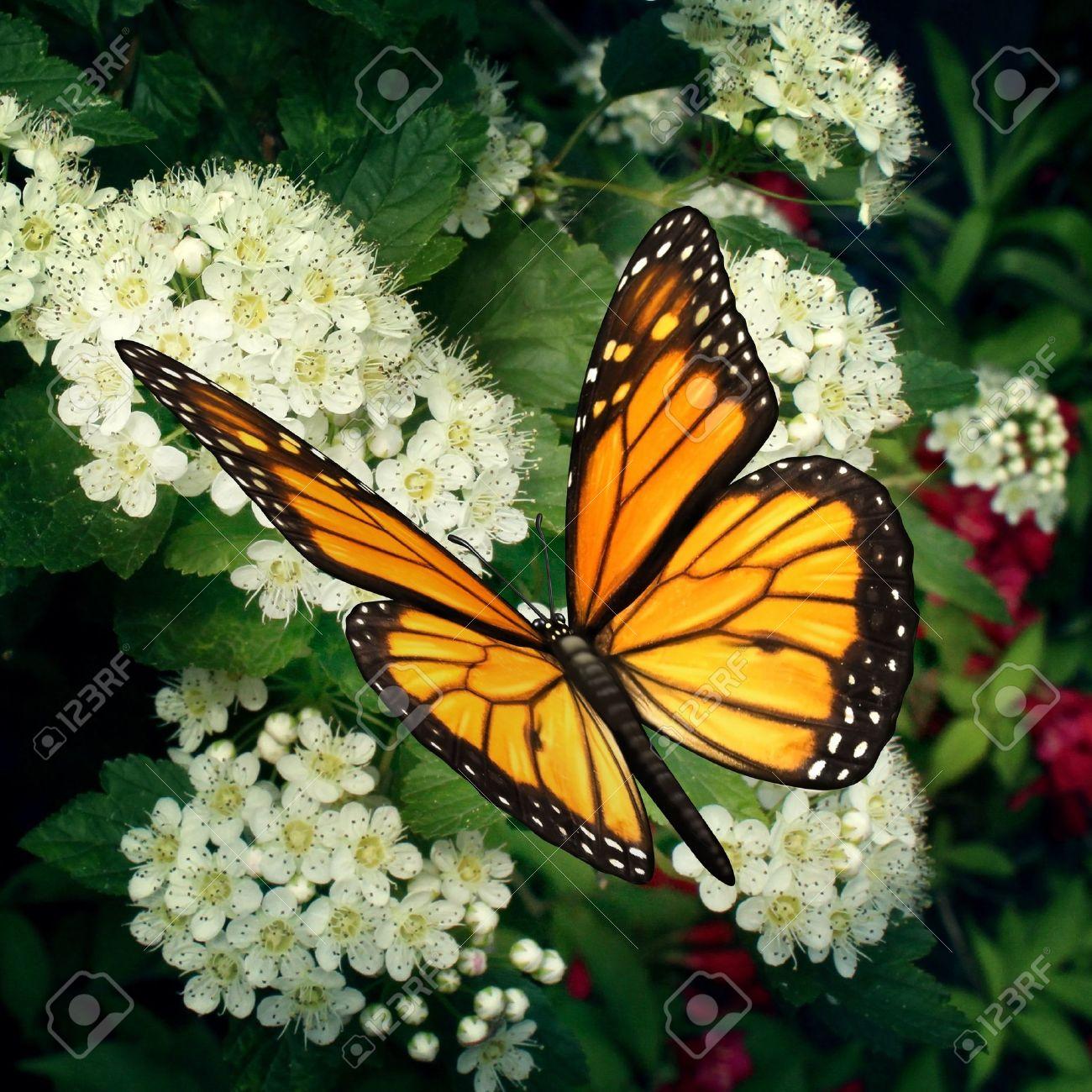 Картинки окружающая среды природа растения