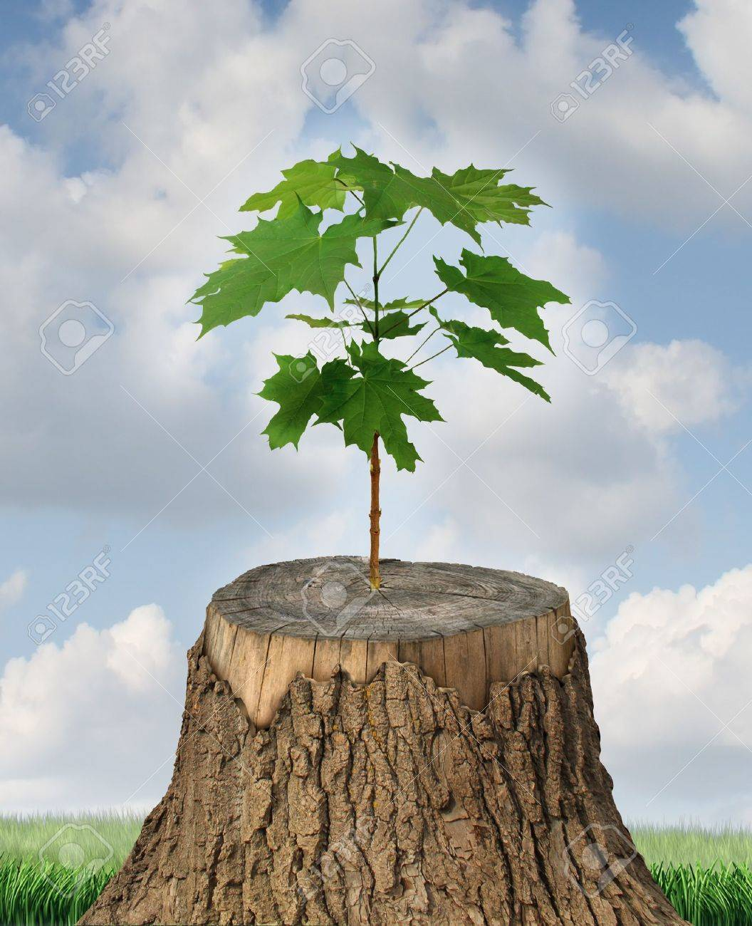 New development and renewal as a business concept of emerging leadership success with an old cut down tree and a new strong seedling growing from the center trunk as a concept of support and building a future Stock Photo - 20386499