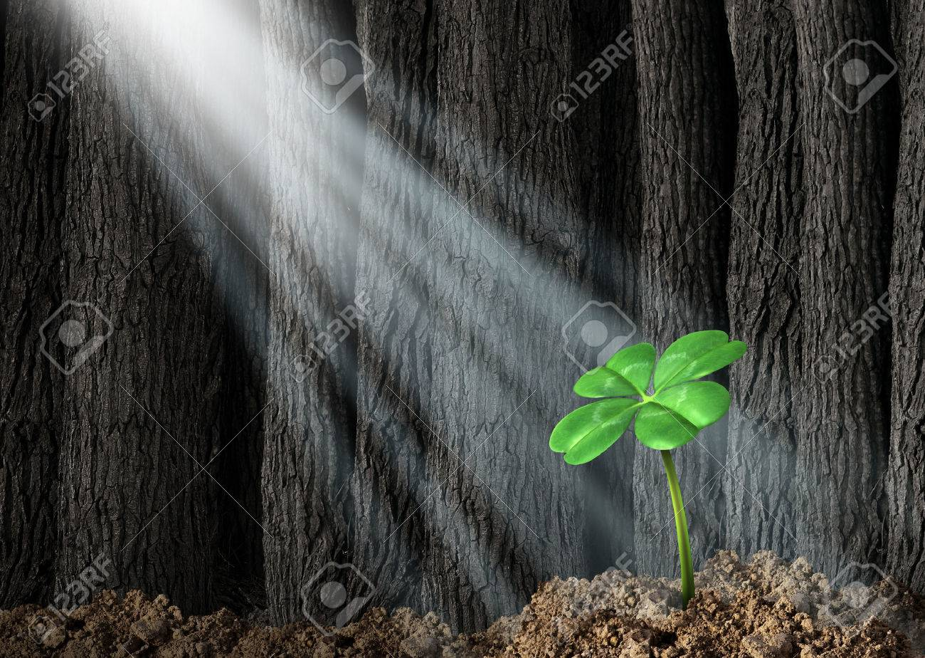 Discover opportunity and prosperity finding success as a business concept with a green four leaf clover growing in a dark forest helped by beams of bright sunlight shinning on the symbol and icon of fortune and luck - 22666975