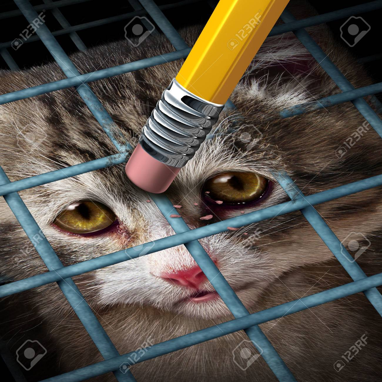 Animal adoption concept and rights as a kitten behind a cage being erased by a yellow pencil eraser as a hope metaphor for adopting pets from a shelter giving freedom to caged orphaned cats and dogs Stock Photo - 24703418