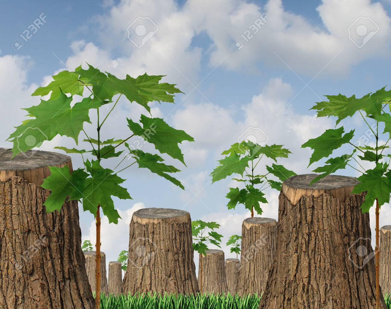 Renewable resources as a concept for sustainable forest management with a group of cut down old trees and new green saplings growing between the wooden stumps as a symbol of hope for the future of the environment and conservation - 25248626