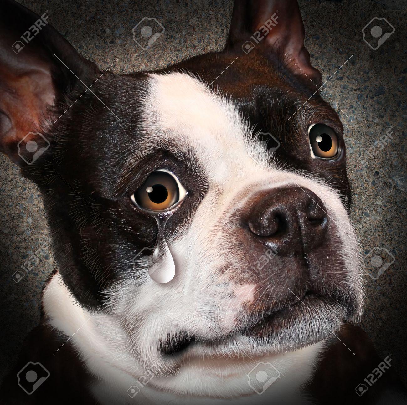 26171436-Lost-pet-animal-cruelty-and-neg