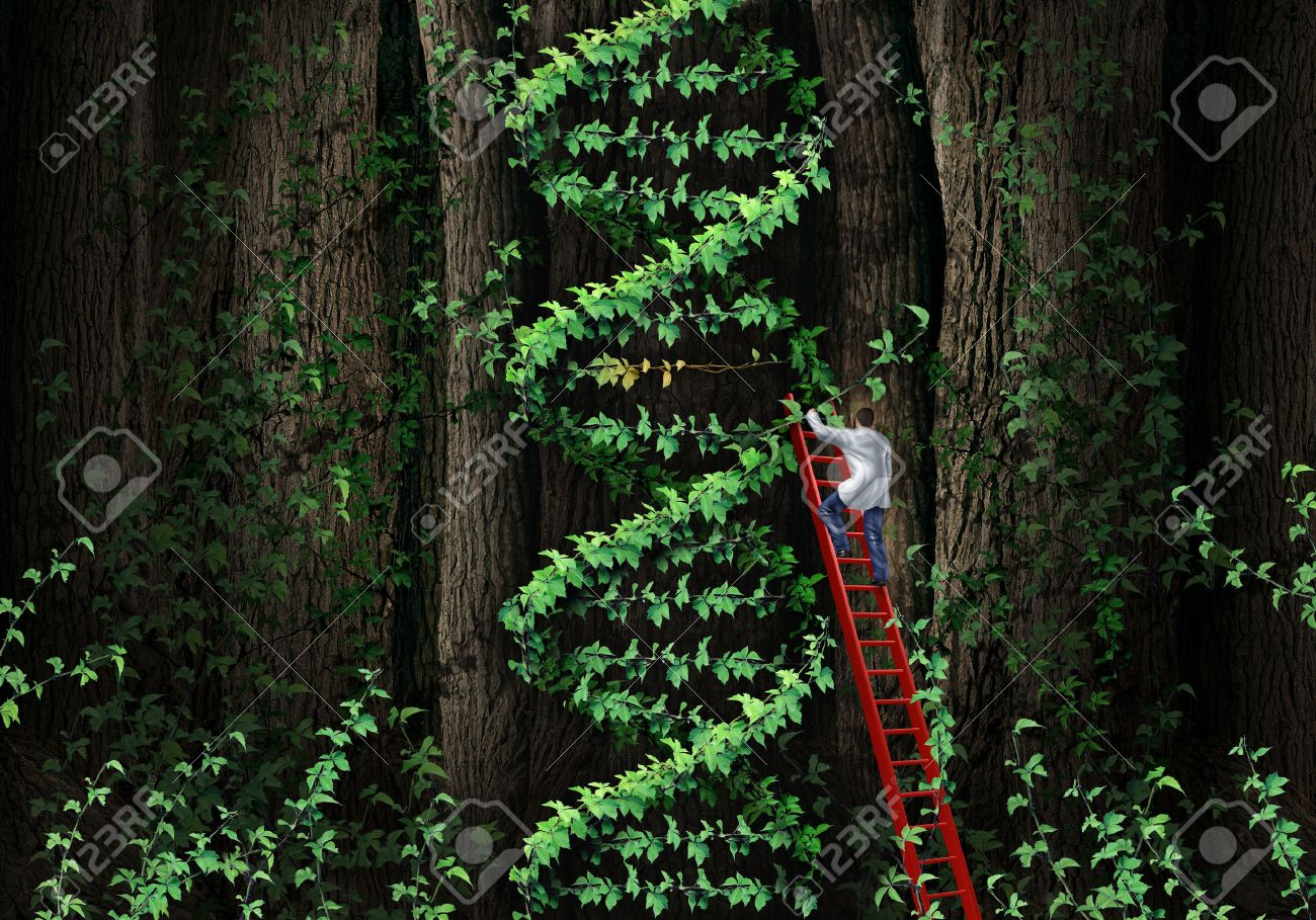 Gene therapy DNA helix concept with a medical genetics specialist doctor on a ladder climbing a plant that represents part of the human chromosomes anatomy as a biotechnology metaphor for genetic testing and repair - 27657696