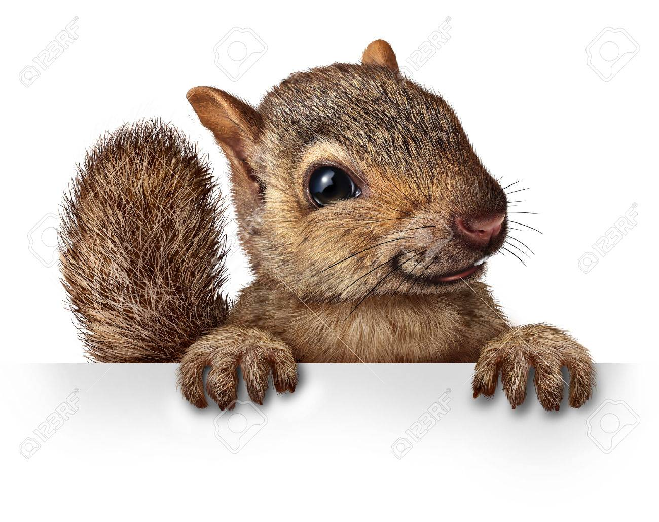 squirrel sign images u0026 stock pictures royalty free squirrel sign