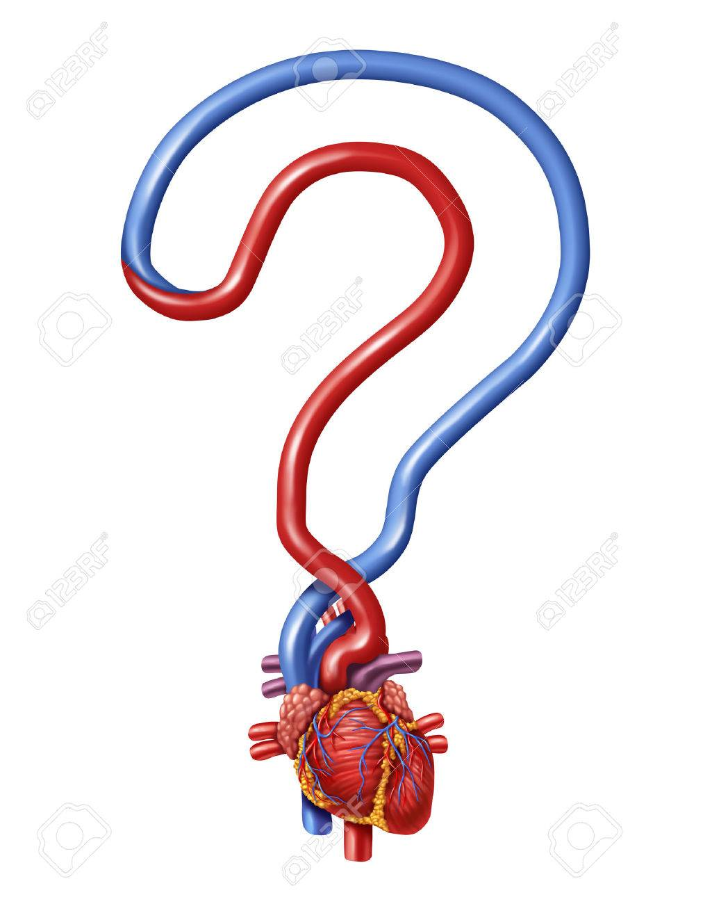 Heart Questions As Human Anatomy For Pumping Blood Shaped As Stock