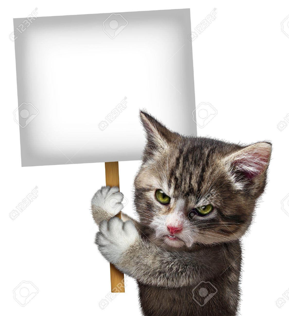 Chat Furieux angry chat tenant un signe de carte vierge comme un chaton félin