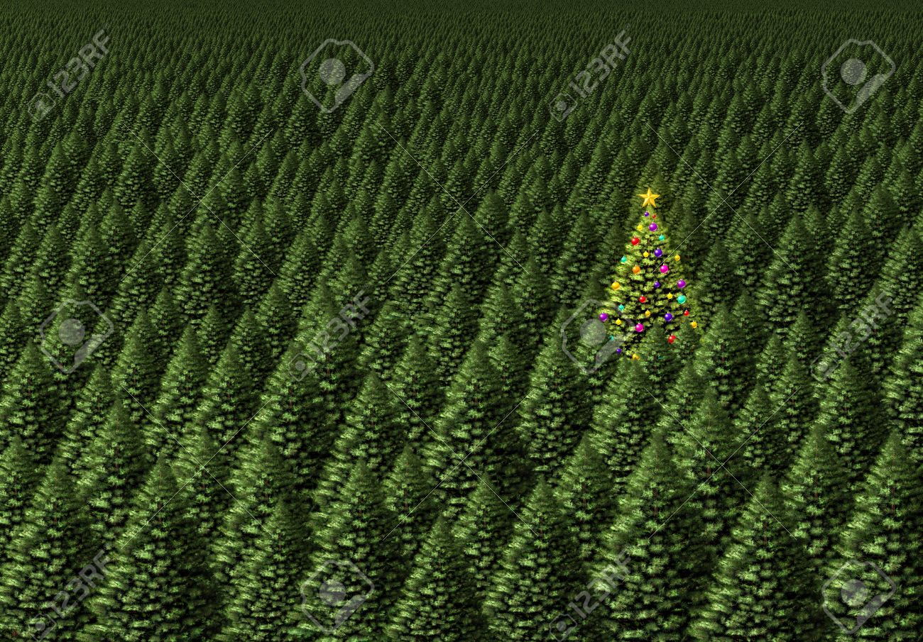 Magical Christmas Tree Concept As A Dense Forest Of Pine With ...