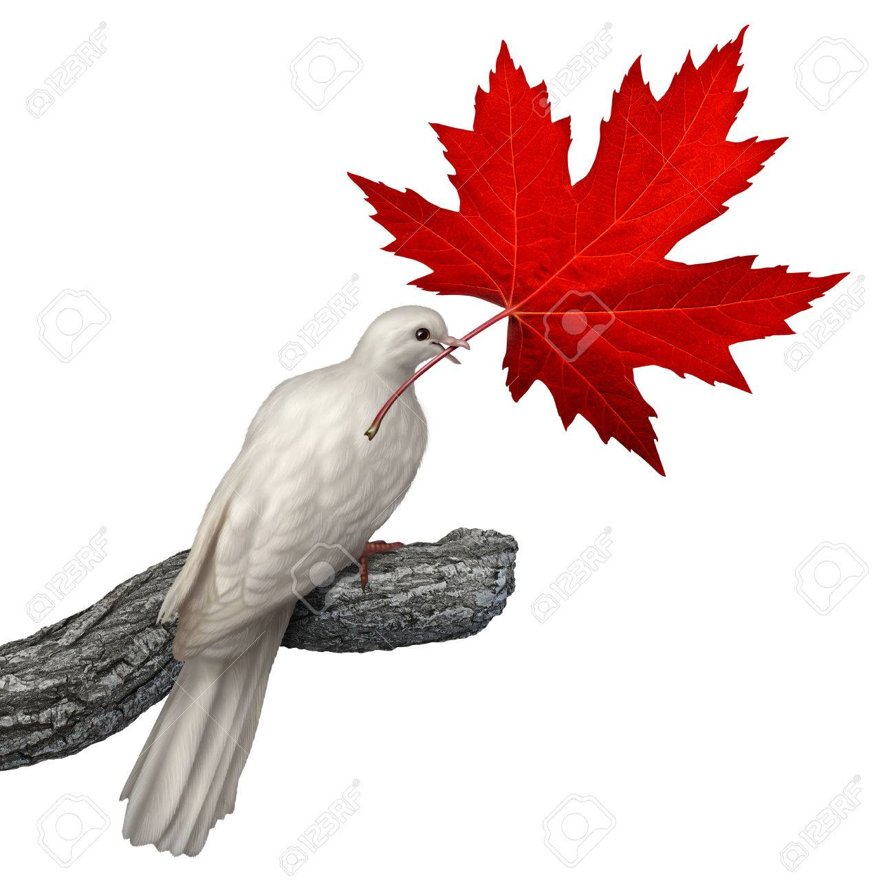 canada peace concept as a white dove holding a red maple leaf