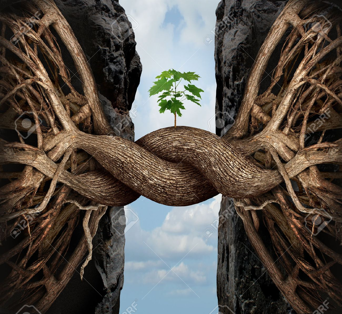 Unity growth concept and bridge the gap business symbol as two tree roots on a high steep cliff connecting and merging together bridging together to form a new sapling as an icon of partnership success and strength. - 36762214