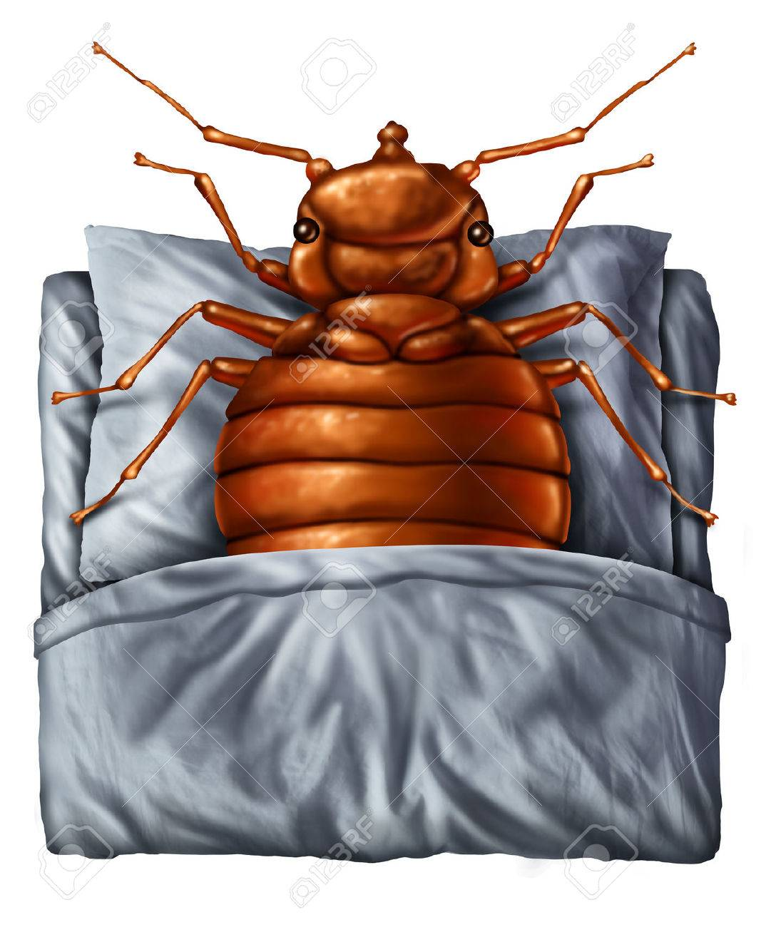 Bedbug Or Bed Bug Concept As A Parasitic Insect Pest Resting Stock