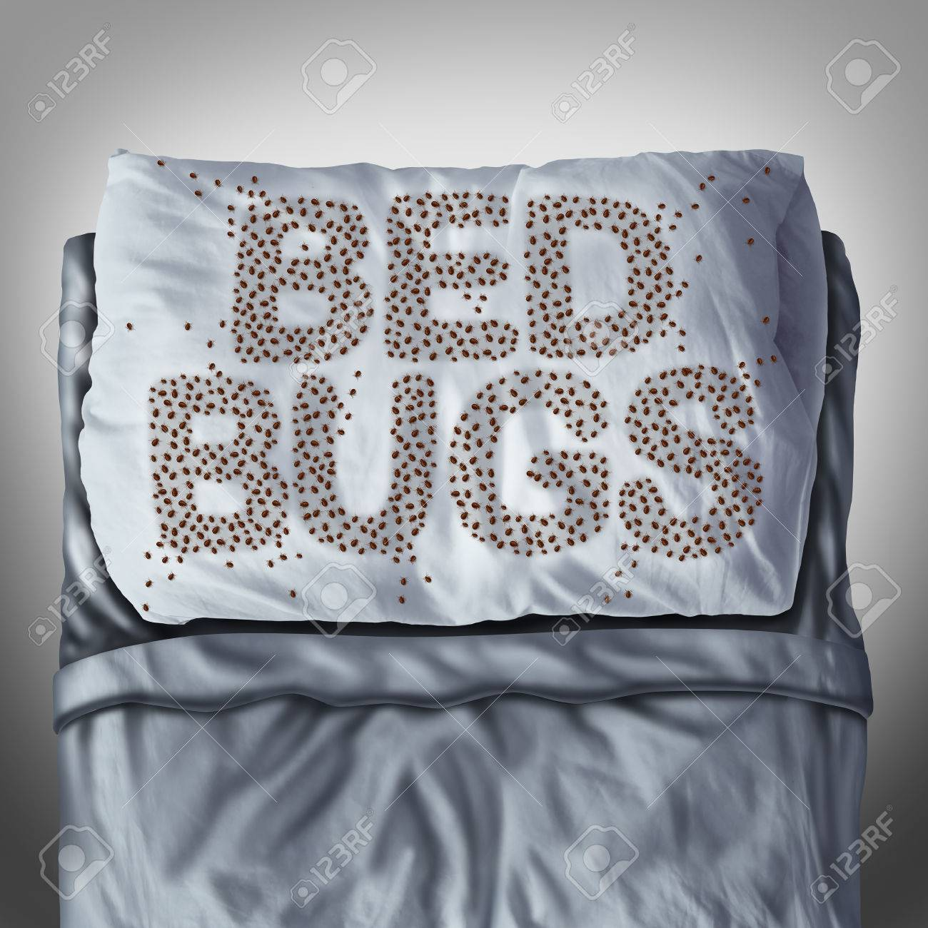 bedbug: Bed bug on pillow and in bed as a bedbug infestation concept shaped  as