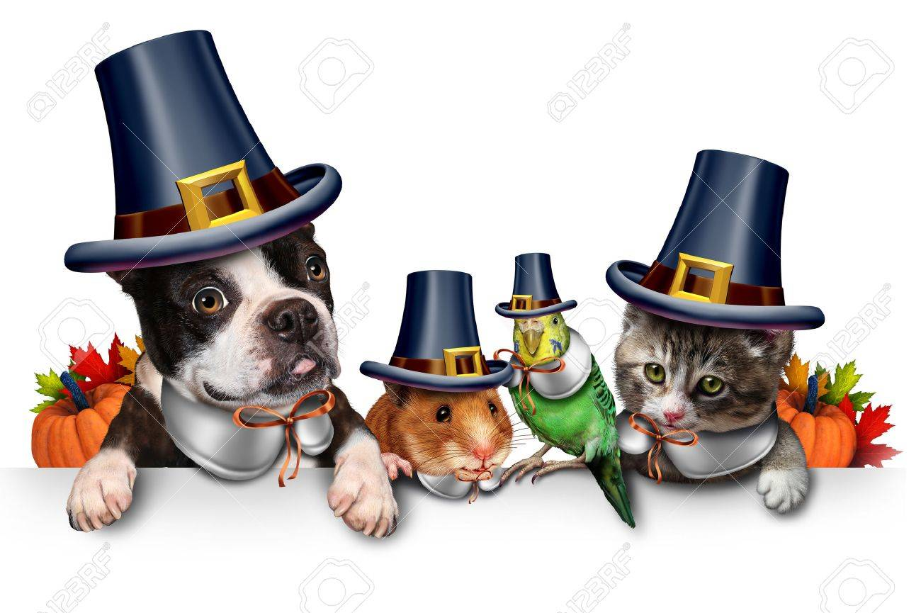 Thanksgiving pet celebration as a blank sign with a fun cat happy dog cute hamster and budgie each wearing a pilgrim hat head garment as an autumn seasonal symbol for funny pets in costume with 3D illustration elements. - 65224033