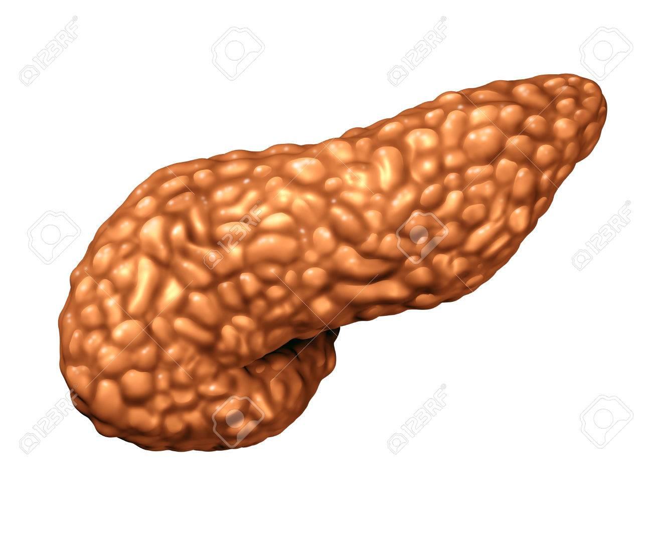 Páncreas órgano Humano Como Una Parte Del Cuerpo De La Glándula ...