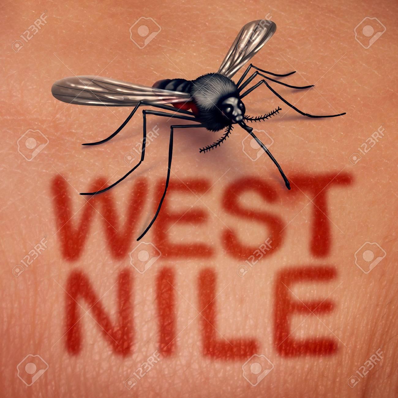 West-Nil-Virus-Krankheit Als Eine Von Mücken übertragene Krankheit ...