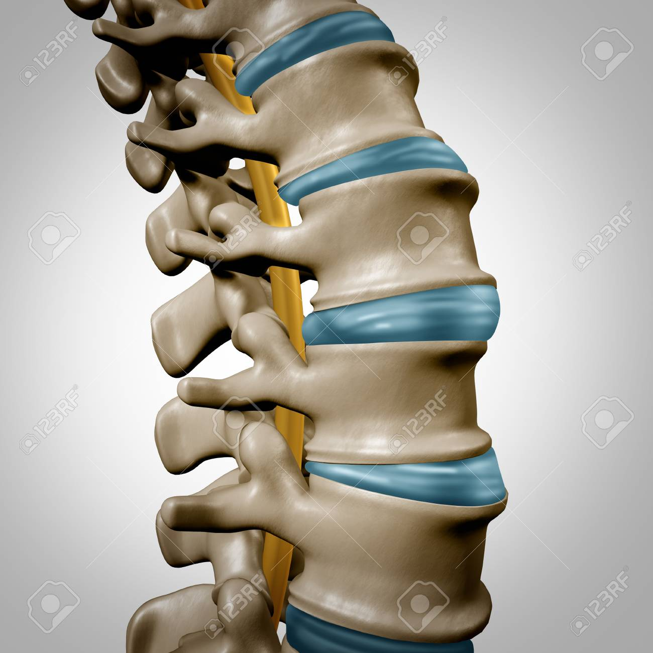 Human spine anatomy section and spinal concept as medical health care body symbol with the skeletal bone structure and intervertebral discs closeup as a 3D illustration. - 93012300