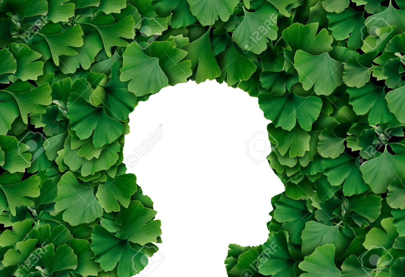 Ginkgo Biloba leaf Human head profile as a herbal medicine concept and natural phytotherapy medication symbol for healing. - 98616879