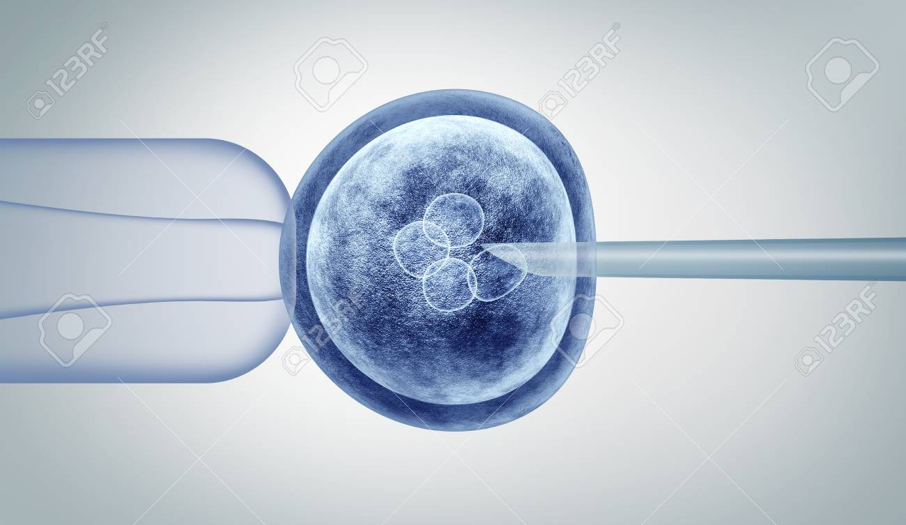Genetic editing and gene research in vitro CRISPR genome engineering medical biotechnology health care concept with a fertilized human egg embryo and a group of dividing cells as a 3D illustration. - 114513826