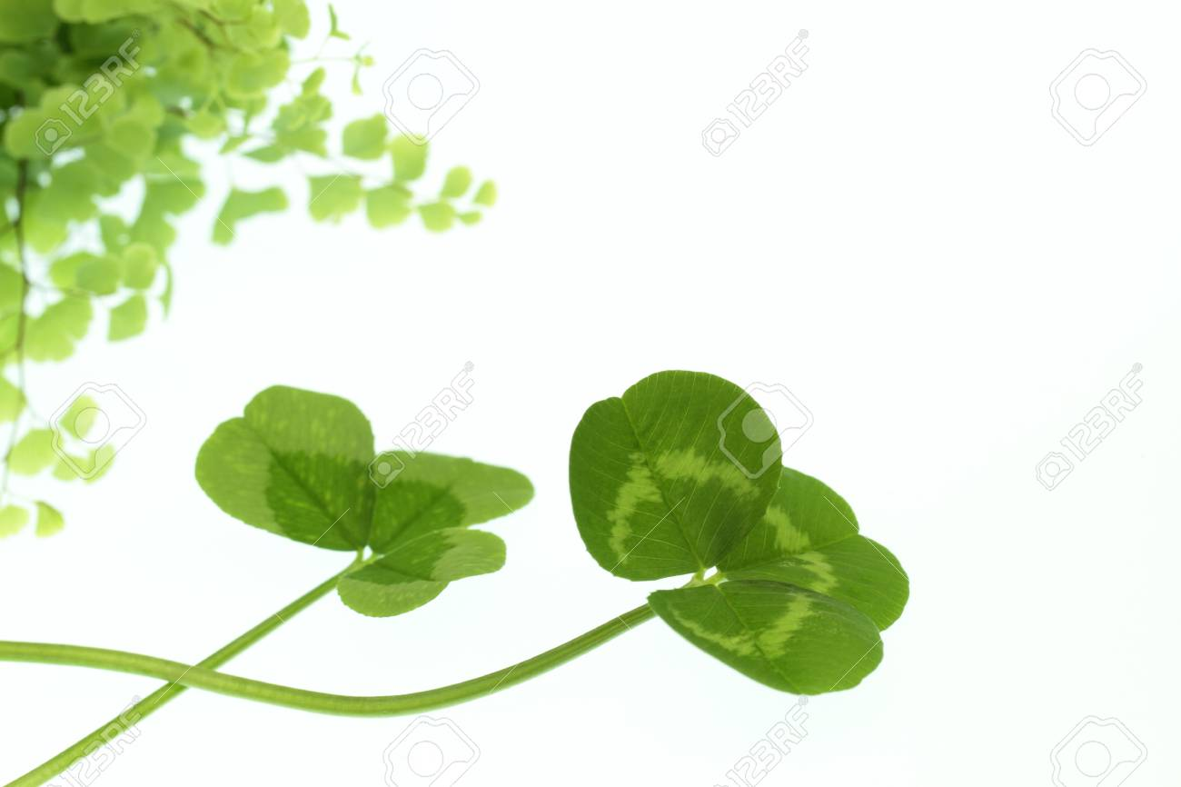 Green leaf of the ecology image Stock Photo - 19052047