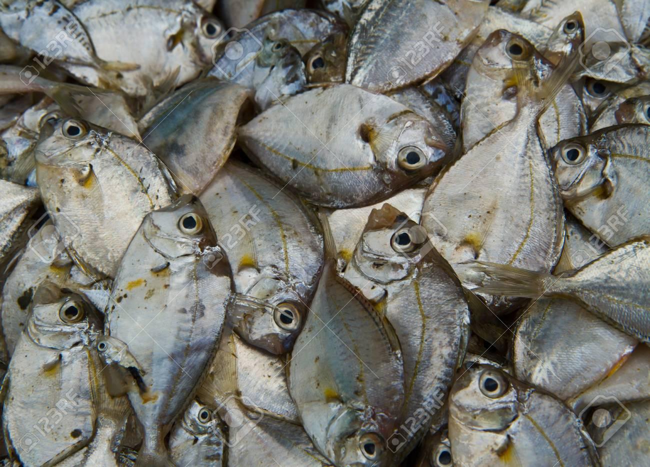 Sea fish  on  background Stock Photo - 13324967