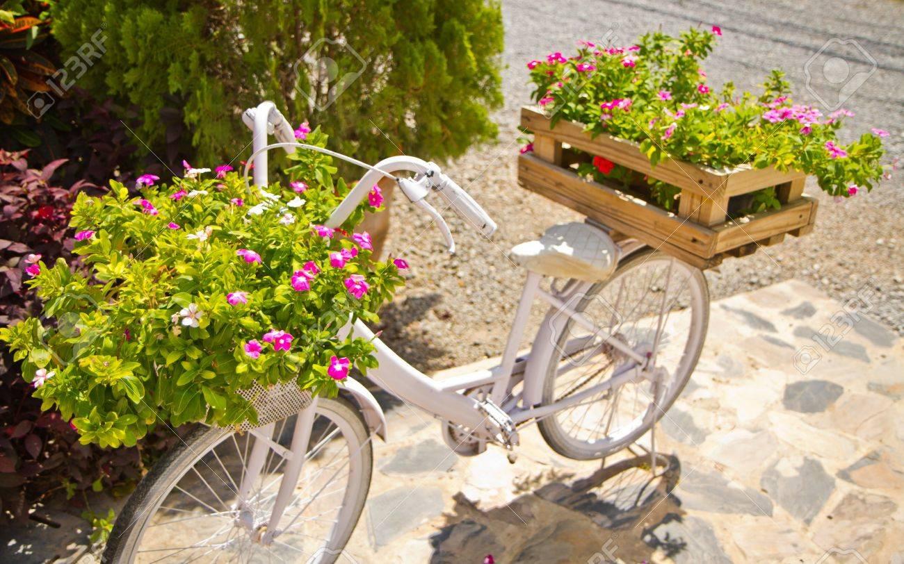 Vit Cykel Och Blommor Royalty-Fria Stockfoton, Bilder, Symboler ...