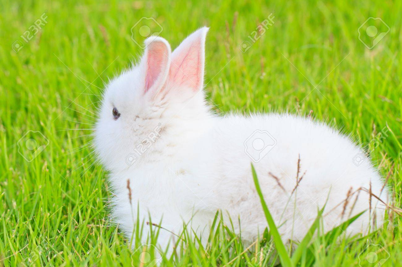 portrait picture of a white little rabbit in grass Stock Photo - 17447279