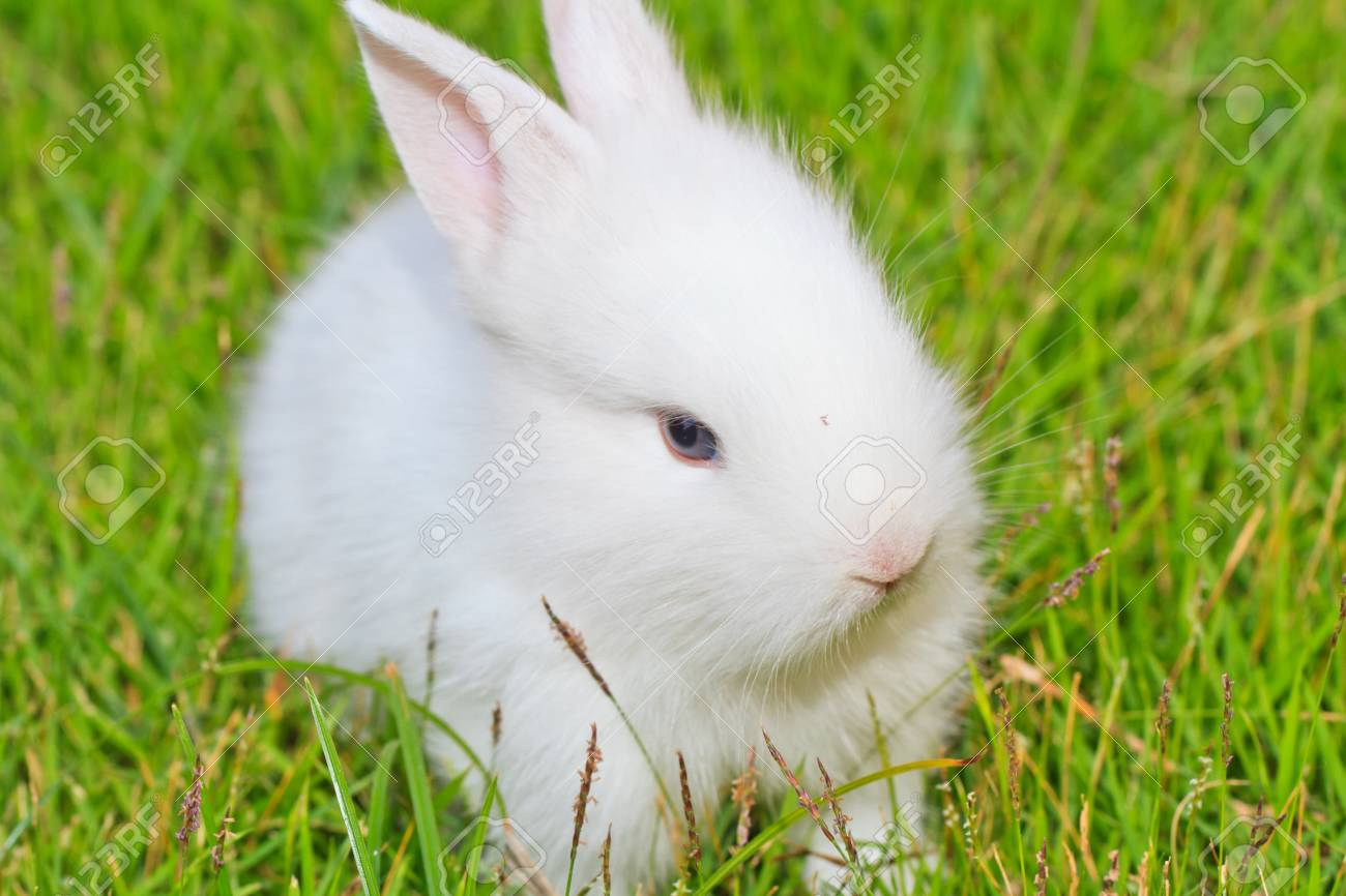 portrait picture of a white little rabbit in grass Stock Photo - 17447281