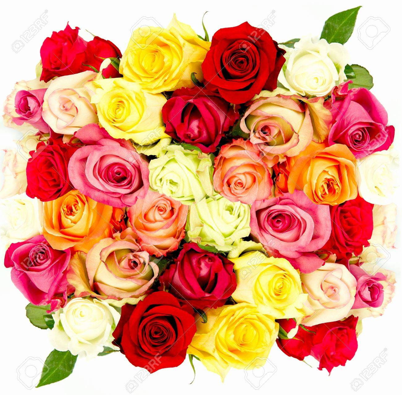 Colorful Roses, Beautiful Flower Bouquet On White Background Stock ...