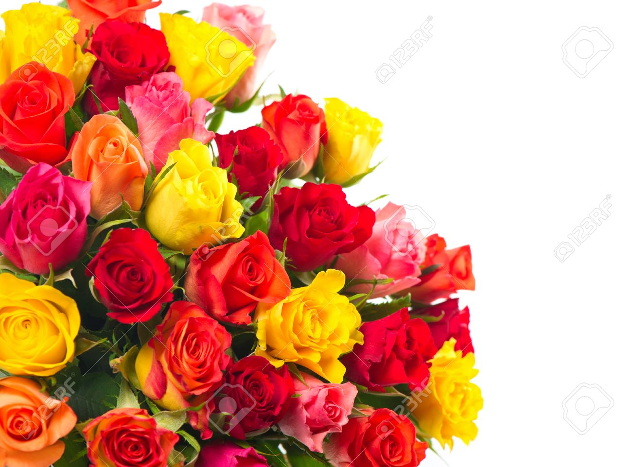 Roses On White Background Bouquet Of Red Pink Yellow Orange
