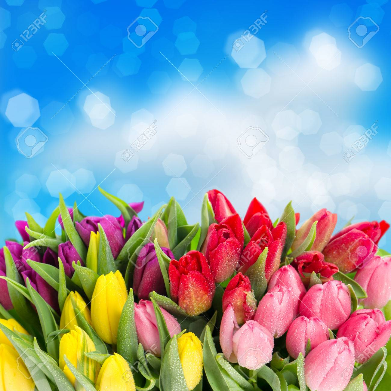 Bouquet of multicolor tulips fresh spring flowers with water stock bouquet of multicolor tulips fresh spring flowers with water drops over blue blurred background floral backdrop mightylinksfo