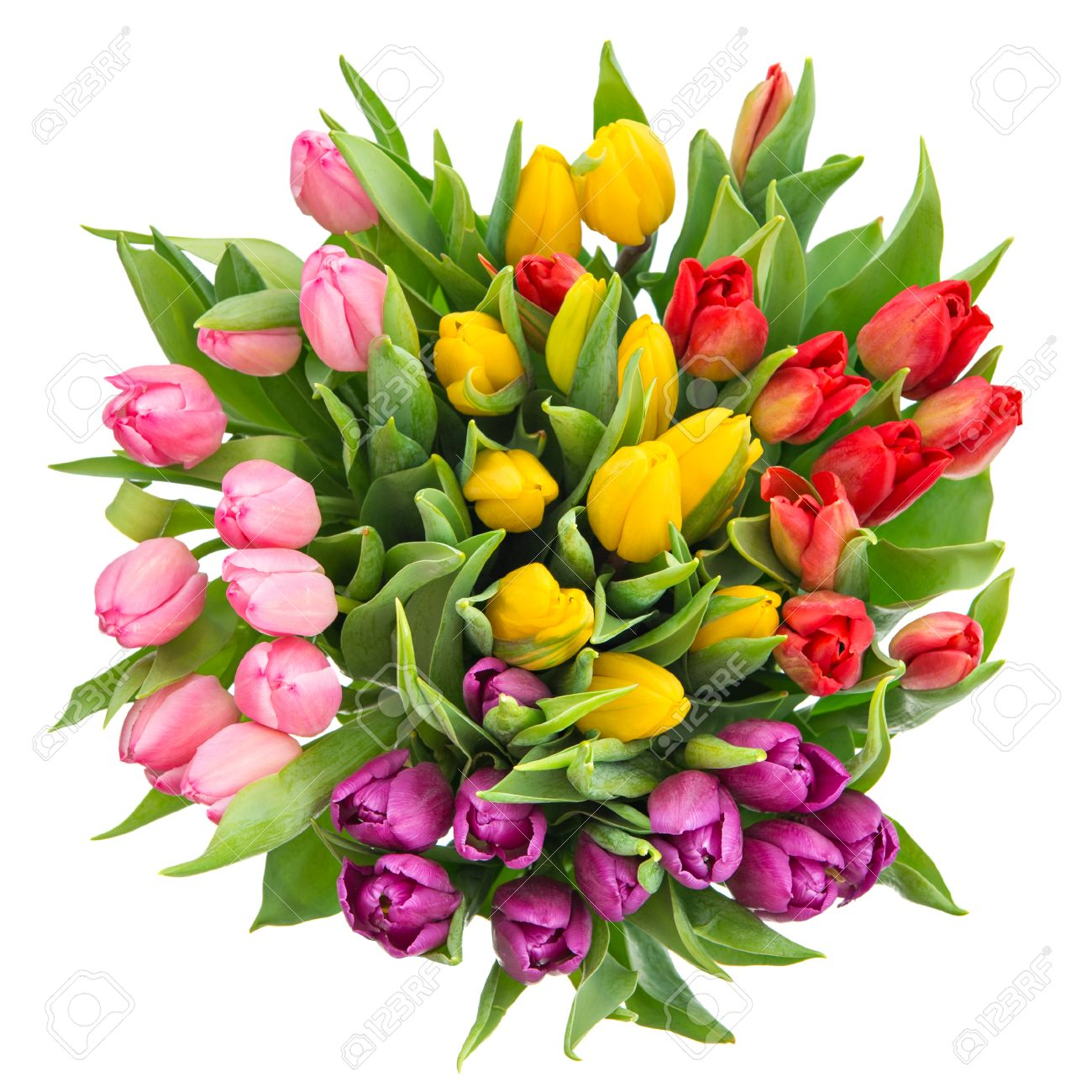 Bouquet Of Fresh Multicolor Tulips Isolated On White Spring Flowers