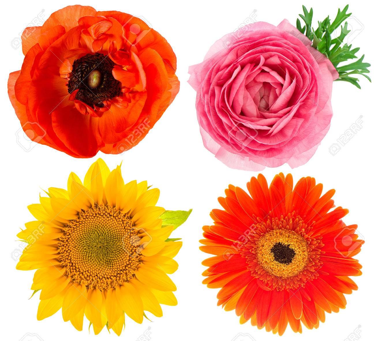 Four Beautiful Single Flower Heads Ranunculus Sunflower Gerber