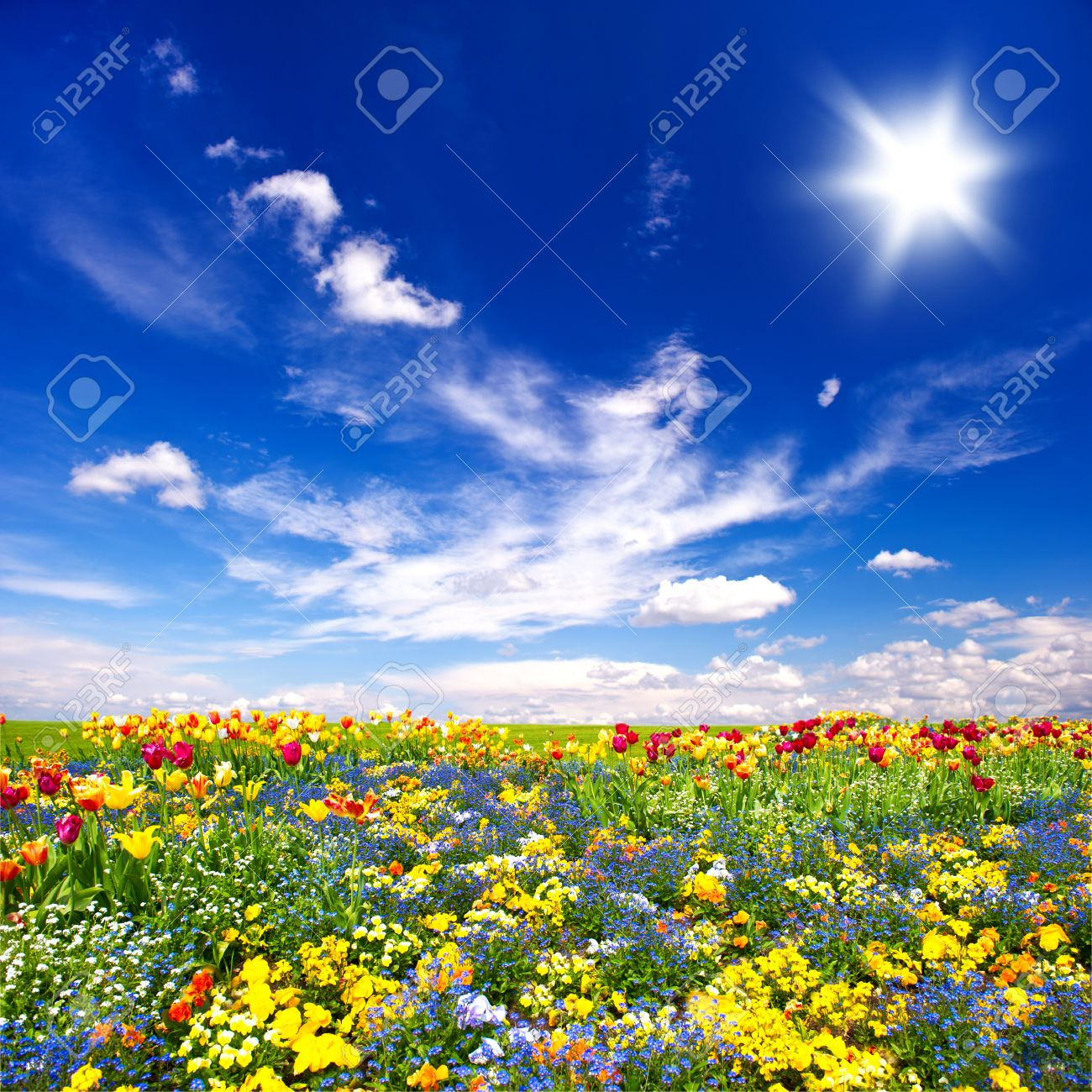 Beautiful flowers meadow and cloudy blue sky nature landscape stock beautiful flowers meadow and cloudy blue sky nature landscape stock photo 33333940 izmirmasajfo