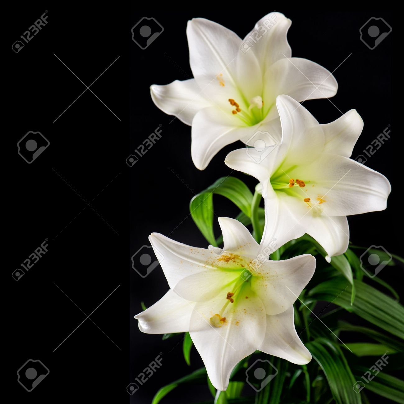 White lily flowers bouquet on black background condolence card stock photo white lily flowers bouquet on black background condolence card concept altavistaventures Images