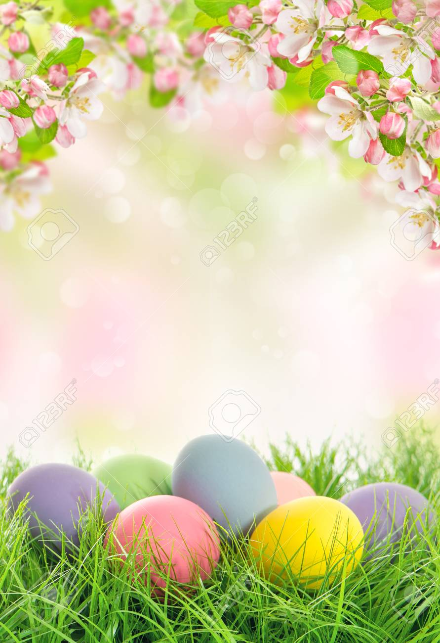 Easter Eggs And Spring Flowers Apple Tree Blossoms On Blurred