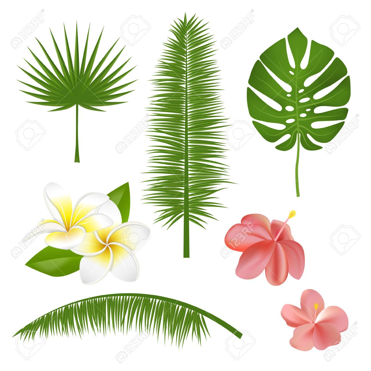 Set Of Exotic Tropical Flowers Plants Leaves Vector Illustration