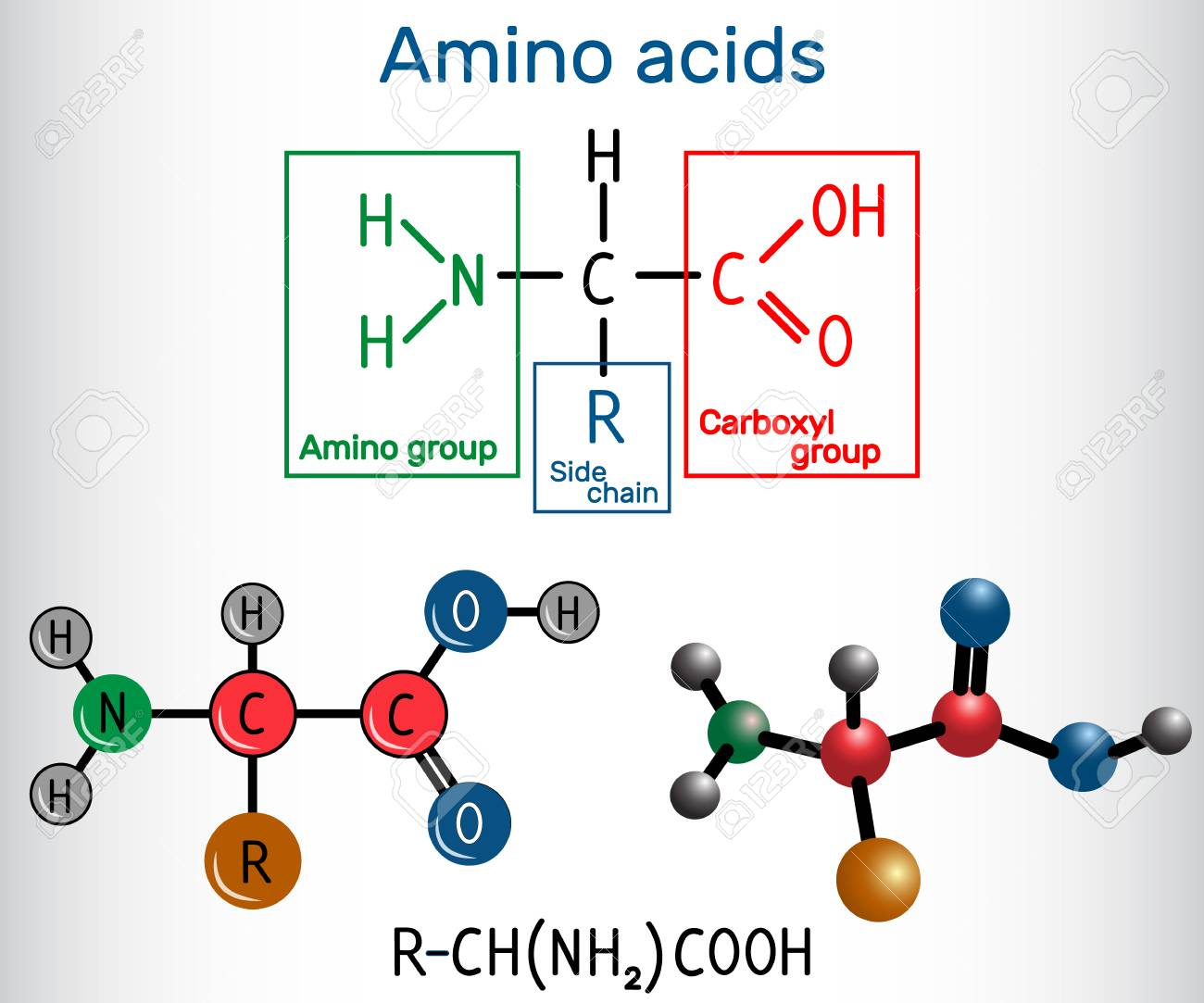 General Formula Of Amino Acids Which Are Building Blocks Of
