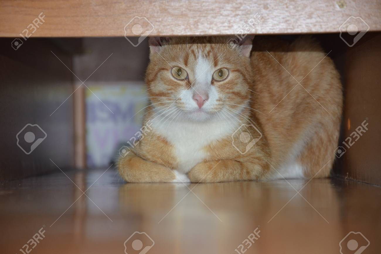 Ginger Cat Looking From Under Bed Horizontal Funny Kitty Hiding