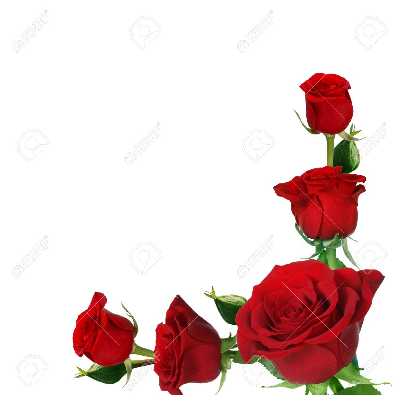 Roses Frame Stock Photo Picture And Royalty Free Image Image 11913269