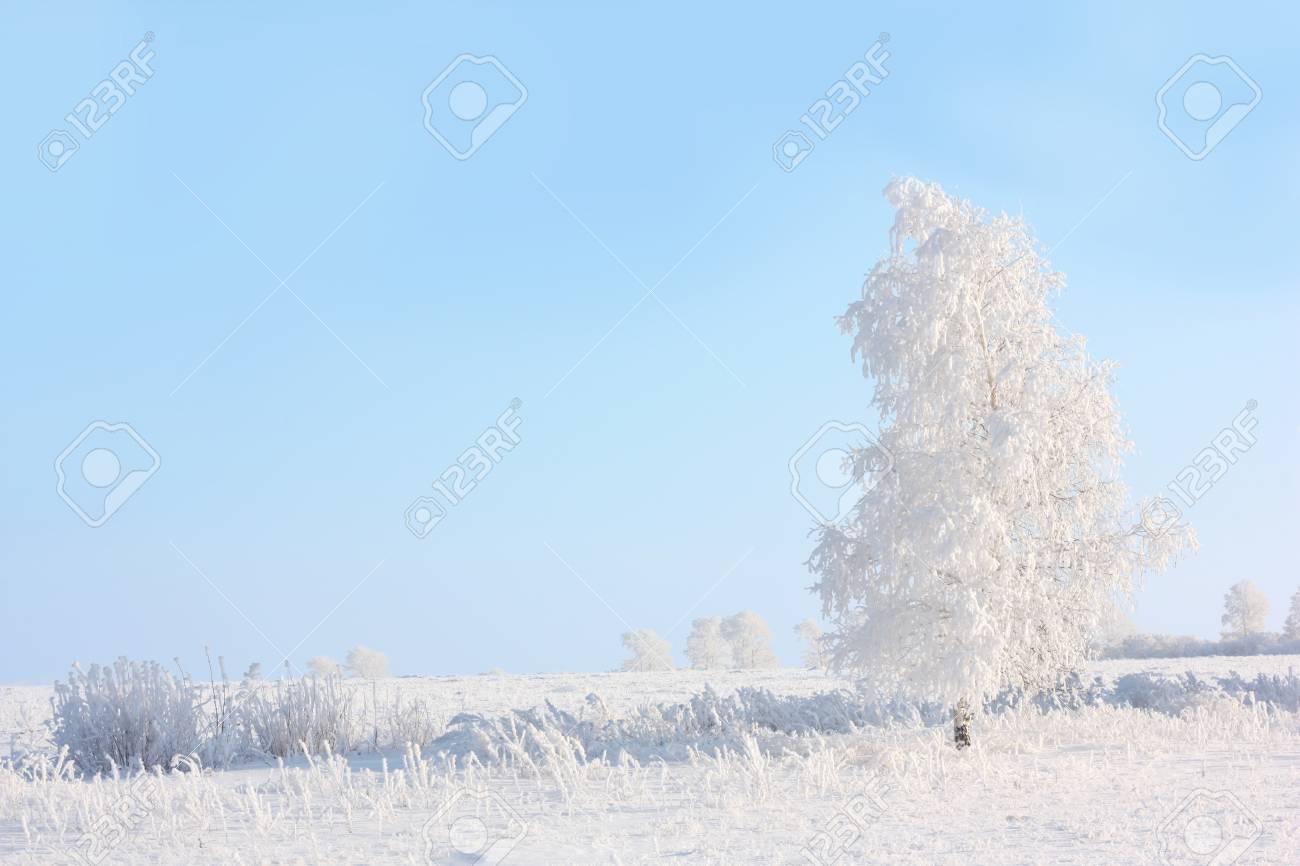 winter tree Stock Photo - 16637972