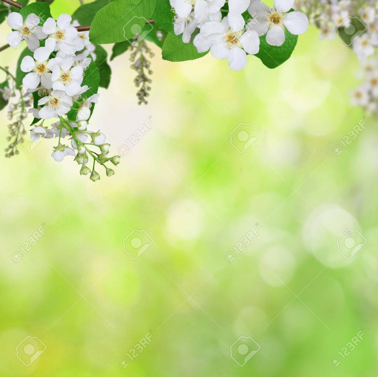 spring background Stock Photo - 20214889