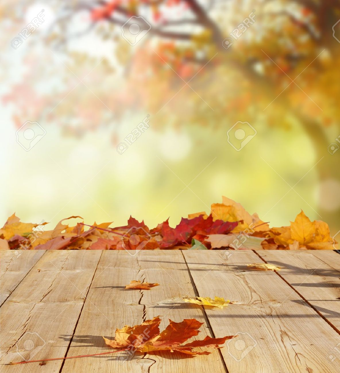 autumn background stock photo picture and royalty free image image