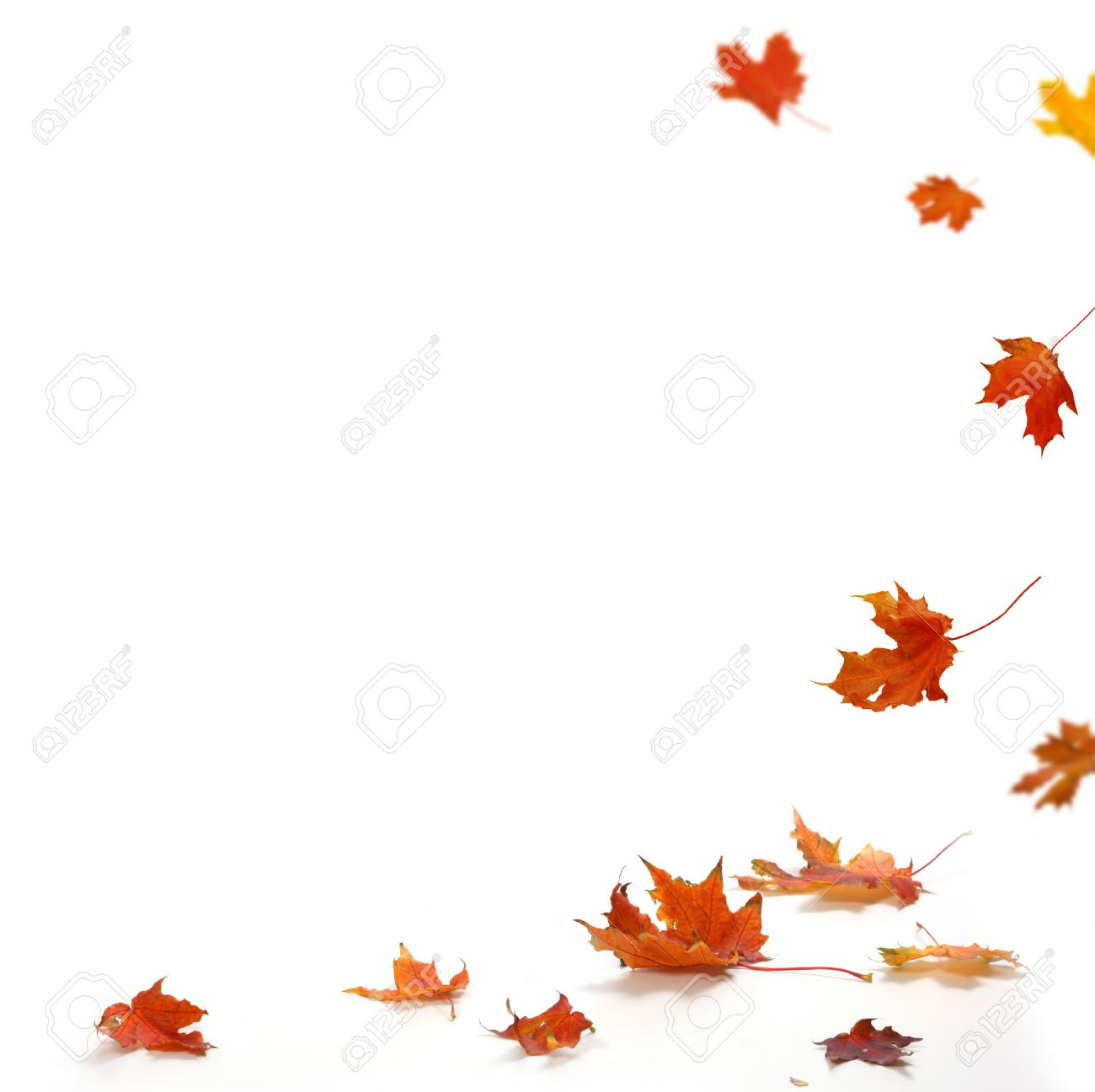 Isolated autumn leaves Stock Photo - 23109953