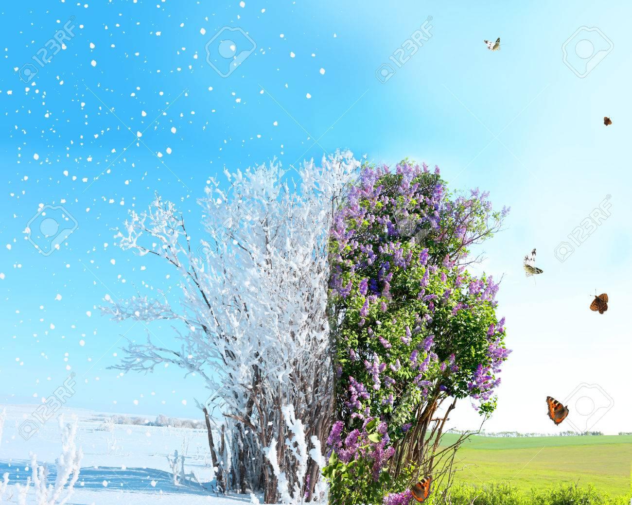 spring winter