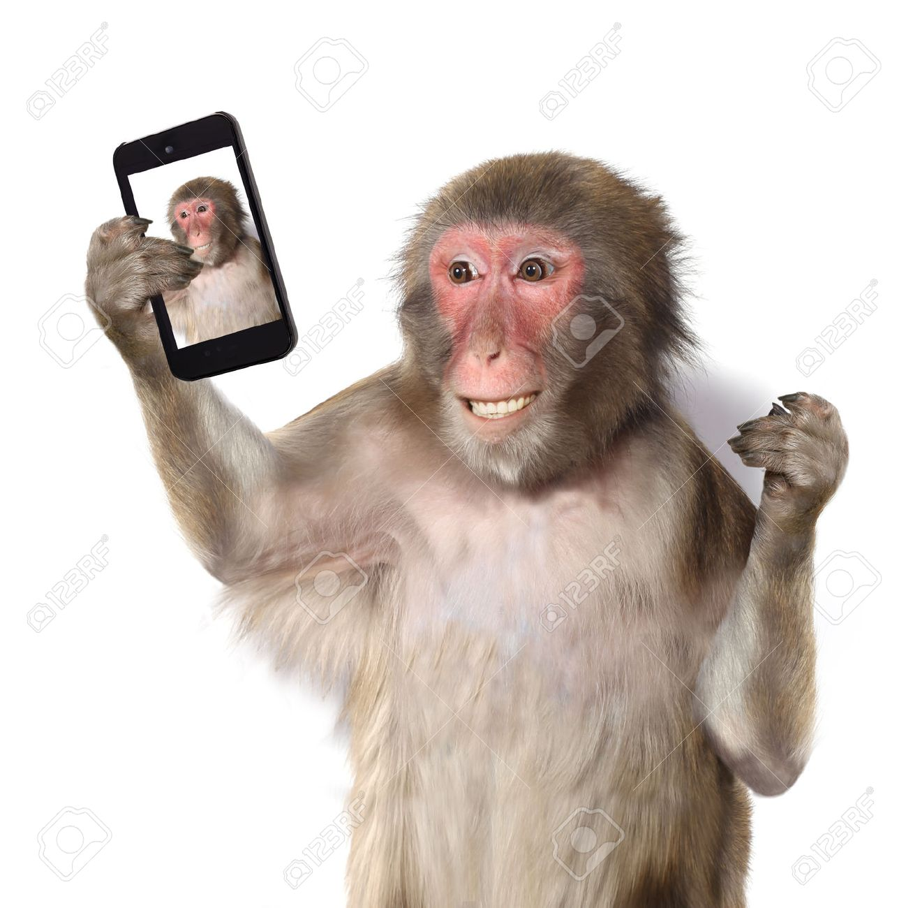 https://previews.123rf.com/images/lilkar/lilkar1509/lilkar150900028/45555387-Funny-monkey-taking-a-selfie-and-smiling-at-camera-Stock-Photo.jpg