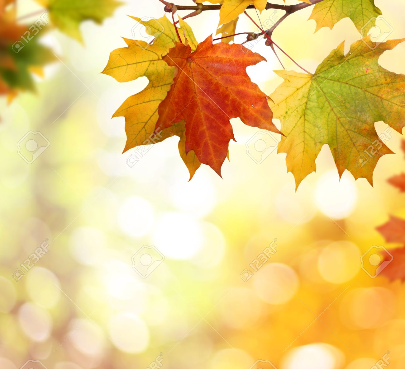 autumn background with falling leaves stock photo picture and