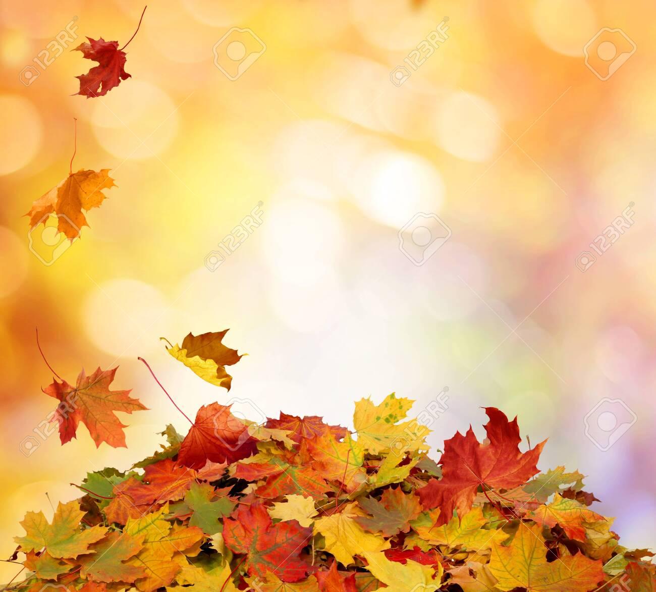 Autumn falling maple leaves - 134272719