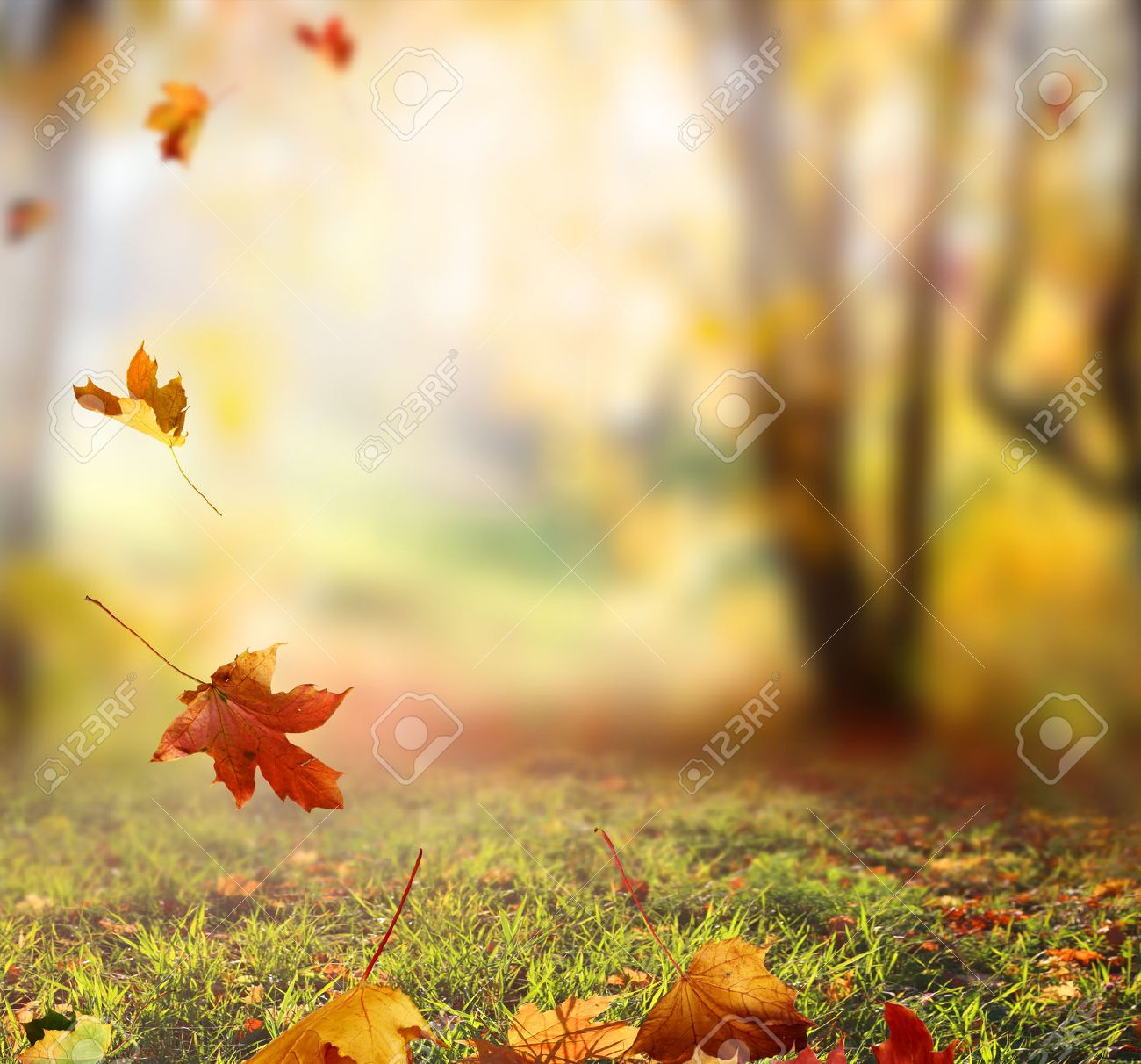 falling autumn leaves background stock photo picture and royalty