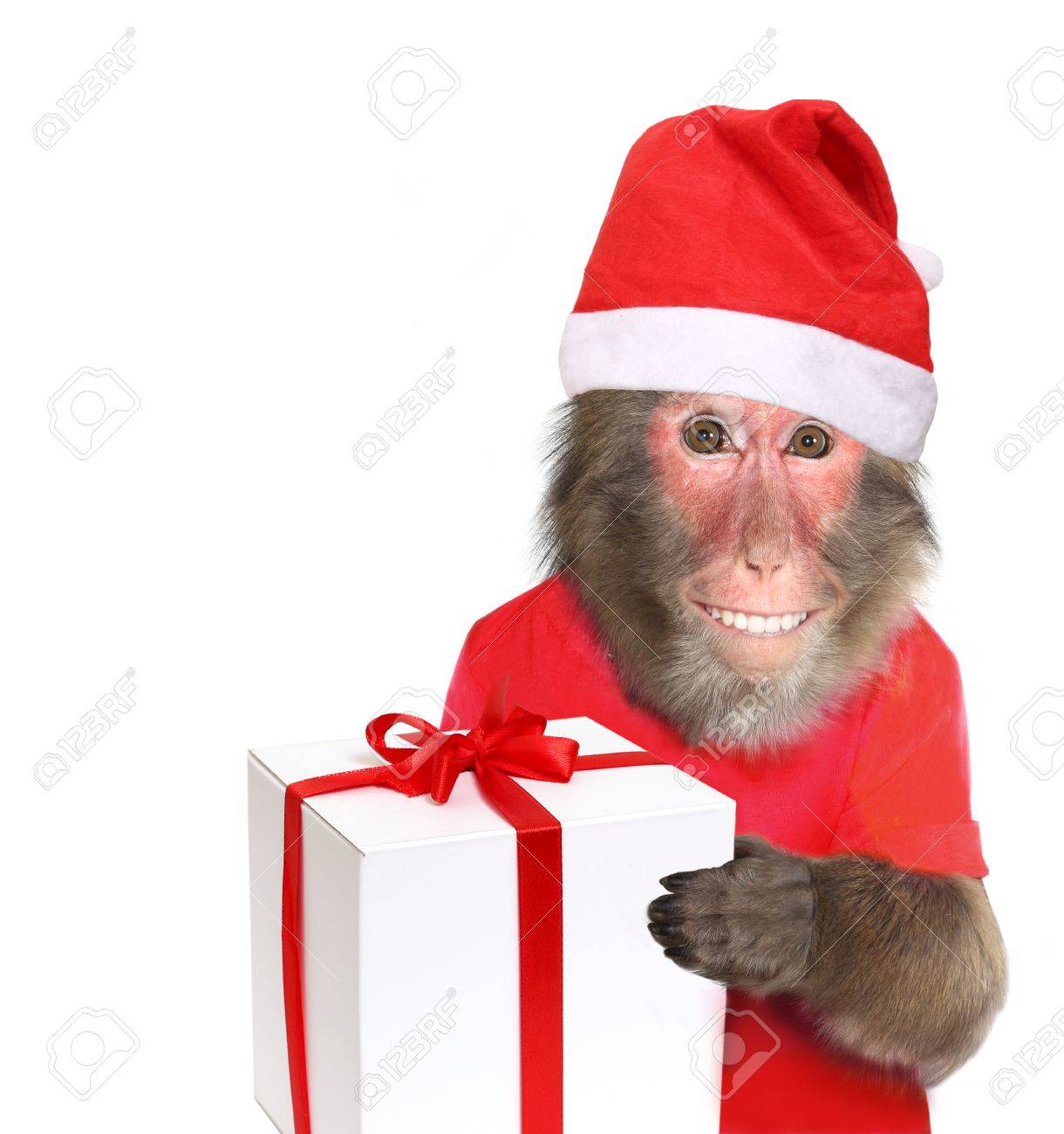 Funny monkey santa claus with christmas gift stock photo picture funny monkey santa claus with christmas gift stock photo 48060995 negle Images