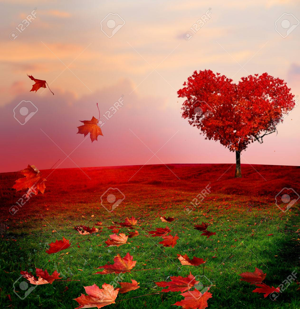 Tree Of Love In Autumn Red Heart Shaped Tree At Sunset Autumn